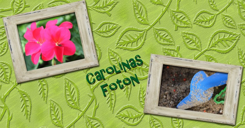 Carolinas foton